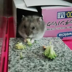 夏野菜うま〜