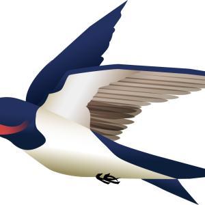 「ツバメが低く飛んだら雨」と言われるのはなぜ? 千代田区立九段中等教育学校(2020年)