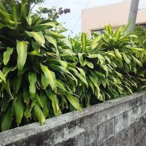 観葉植物の作り方