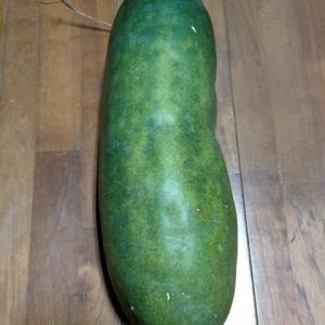長期保存可能野菜