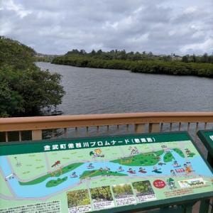 億首川のマングローブ林