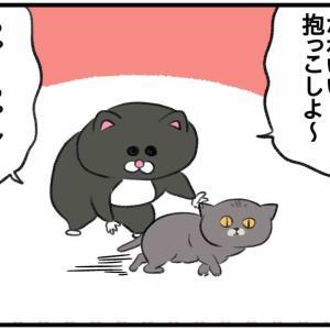 猫を見せびらかす