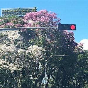 満開の桜ではないけれど。。。