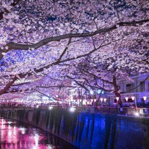 中目黒でお花見デートをするなら!雰囲気満点の桜イベント3選