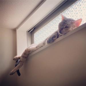 猫になりたい
