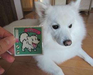 こんなシールもある☆~白犬ピッツ