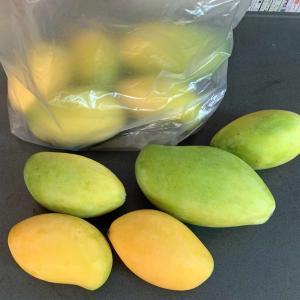 ただいま、カンボジアはマンゴーの旬です。