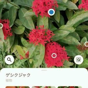 スマホのアプリでGoogle Lens 使われていますか?