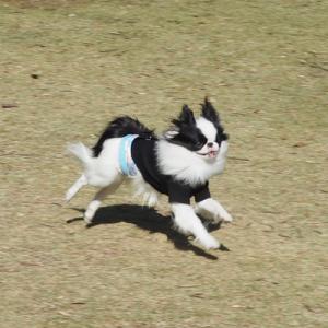 「愛犬の駅 伊豆高原」を満喫