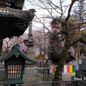 八事山興正寺の「桜」
