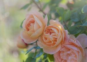 遅咲きの花