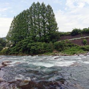 狩野川鮎、高水の中試釣り