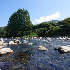 狩野川鮎、午後から追う