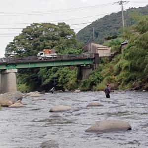 狩野川鮎、活性が上がるのは10時過ぎ