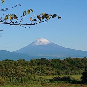 狩野川、富士山初冠雪の中鮎釣りへ