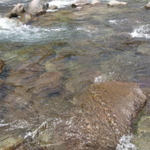 狩野川鮎、激渋状態