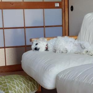 愛犬との暮らし