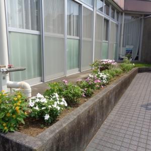 8月 花壇