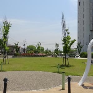広島県福山市 花園公園 薔薇