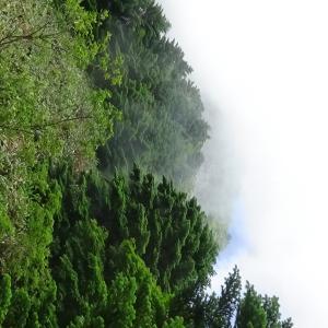愛媛県西条市 石鎚山 西日本最高峰 土小屋ルート P5 END
