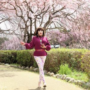 常陸風土記の丘の枝垂れ桜を堪能する