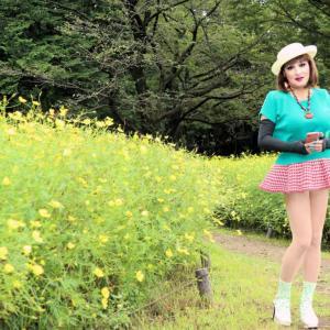 昭和記念公園でレモンイエローに染まるコスモスと出会う