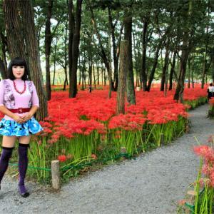府中郷土の森公園は彼岸花が見頃でした