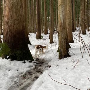 残雪の里山散策のこと