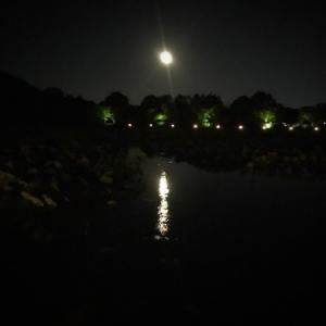 京都・大覚寺の観月の夕べ。