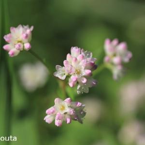 ピンクのかわいいお花