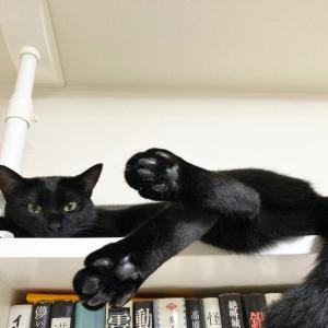 黒猫感謝の日