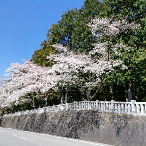 富士河口湖町 冨士御室浅間神社
