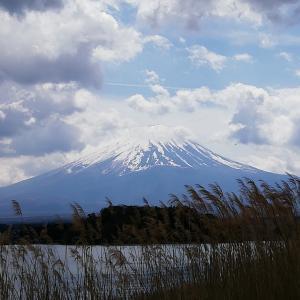 富士河口湖町 大石公園