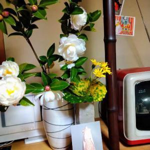 山茶花と石蕗