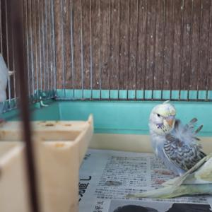 保育園部屋から鳥かごへ