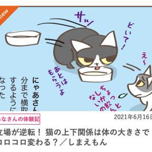 立場が逆転!猫の上下関係は体の大きさでコロコロ変わる?…毎日が発見ネット76