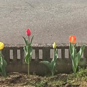 庭の片隅に春♥