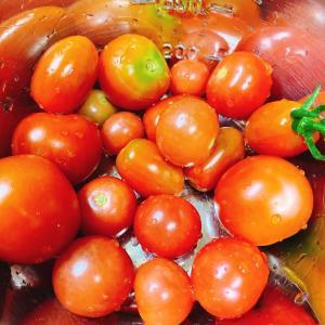 プランターのプチトマトが、、、