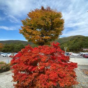 おひとりさま・温泉入ってきました♨️ 秋の富士山たっぷり