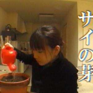 「サイの芽」(sainome)【ショートフィルム】Short Film(English subtitles)