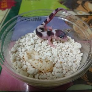 桜が咲きました。ベビーも孵化して卵も産まれました。