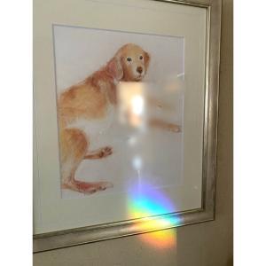 「なな」の絵に虹がかかった今朝起きたら少し離れた窓にかけたサンキャッチャーからの虹が...