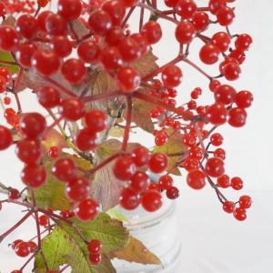 カワイイ真っ赤な実(ビバーナムコンパクタ)と秋の花いろいろ