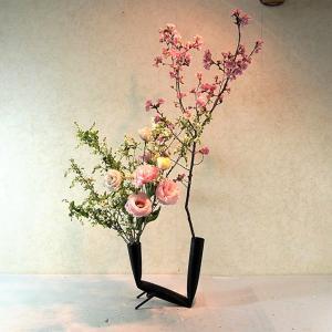 家で桜(里ザクラ)色の濃い桜がきれい