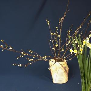 梅の可愛らしいお花が咲いたので、水仙とあわせて春の香りがすご過ぎ~~