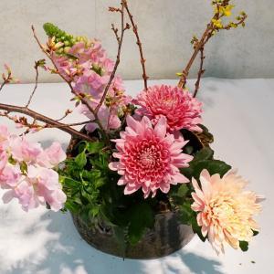 今日もピンクの花をたくさん(おかめ桜が咲いた)いける