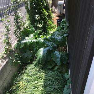 狭小お庭の草刈り