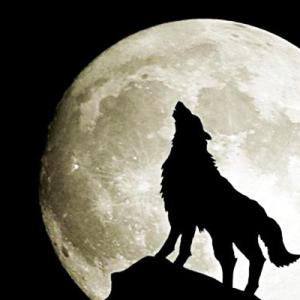 【初心者向け】人狼ゲームの基本的な考え方について考えてみた【汝は人狼なりや?】