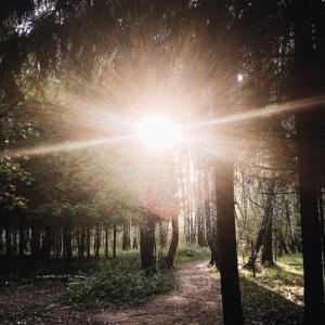 本当のわたしとつながり、光の道へシフトした瞬間