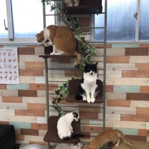 保護猫カフェまちねこさんに行ってきました